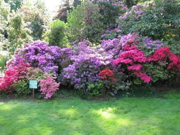 Aiuole fiorite nel giardino di aiuole e indietro foto for Aiuole fiorite immagini